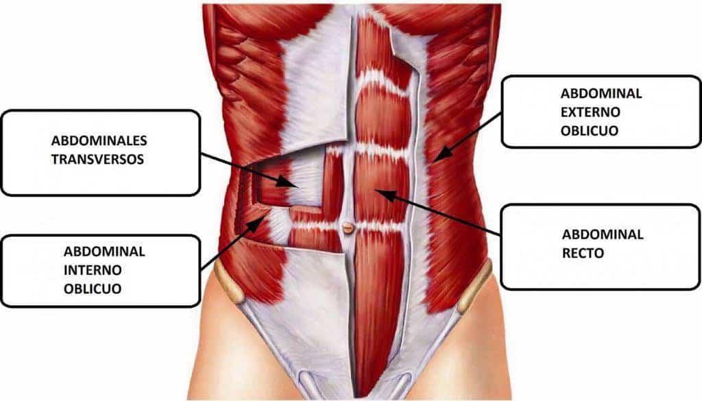 Musculacion gimnasio abdominales hipopresivos