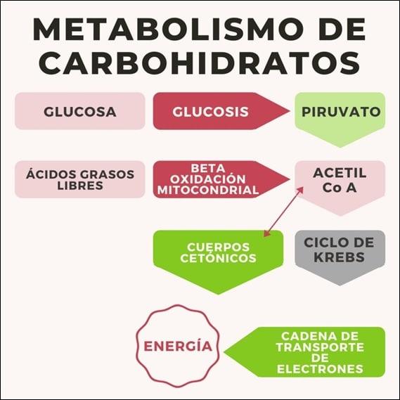 carbohidrato dieta